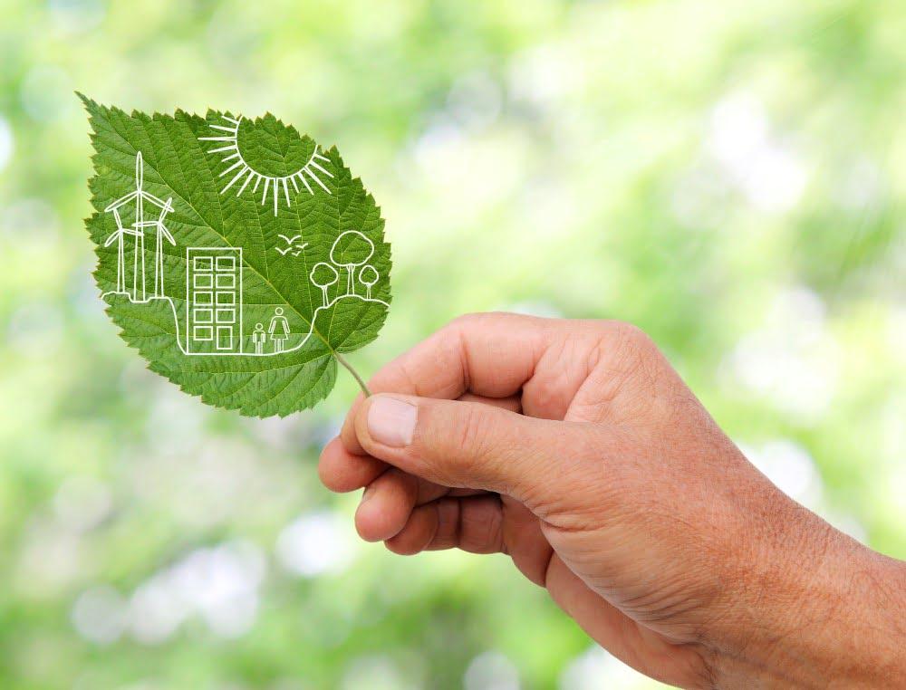 MAnd der holder et grønt blad i hånden